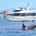 avistamiento-cetaceos-07.png - Multiaventura Paloma