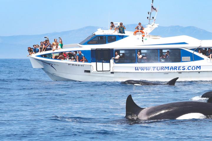 avistamiento cetaceos png